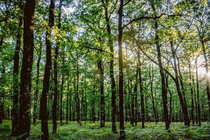 Εκδρομή Τριπόταμα – Δάσος Φολόης